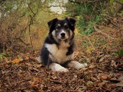 My Romanian rescue dog Annie amongst the Autumn leaves!