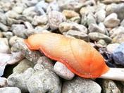 Mr slug