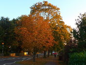 AUTUMN COMES TO NORWICH