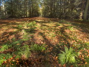 Autumn In Felbrigg Woods