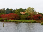 AUTUMN COLOUR AT PENSTHORPE NATURAL PARK