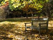 Marks Hall Estate, Autumn colours.
