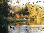 Autumn colour reflections.(photo challenge)