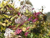 Autumn colour.(photo challenge)