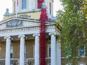 Poppies:Weeping Window