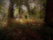 Sprinkling of Autumn light