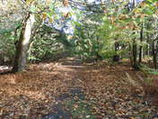 In the woods at dunwich