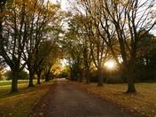 Sunlit Autumn Avenue.