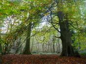 Such beauty in Weston Woods.