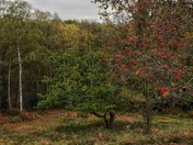 Autumn colours on mousehold heath