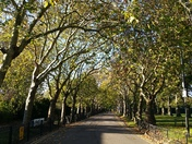 Autumnal colours in Barking Park