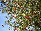 Berries on fill flood!