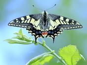 My favourite Butterfly from the summer,