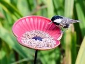 Poppy bird feeder