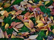 The last leaves of autumn