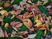 The last leaves of autumn