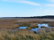 REED BEDS AT BLAKENEY