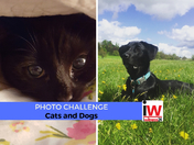📸 PHOTO CHALLENGE: Cats and Dogs 📸
