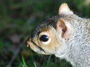 Friendly Squirrels at Oulton Broad