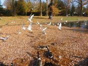Autumn scene of Valentine park Ilford