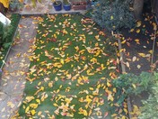 Mosaic of Fallen Autumn Leaves on Garden Lawn