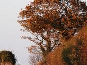 Autumn Scenes