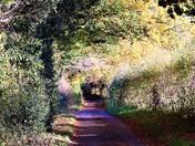 Long Lane Barton Turf