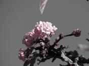 Autumnal Blossom