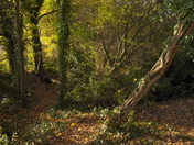 Autumn in Harrow Lodge Park