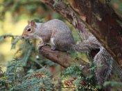 Squirrels in my garden, tucking into my freshly planted bulbs!
