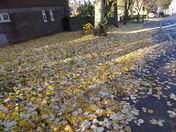 LATE AUTUMN IMAGES