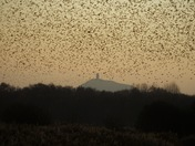 Starlings over the Tor