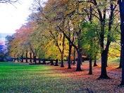 The beauty of Ashcombe Park