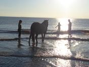 Horse dip