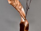 Copper Plant?