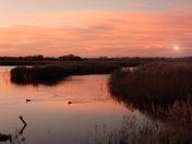 Strumpshaw fen sunrise