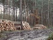 Logging.   Forestry management.