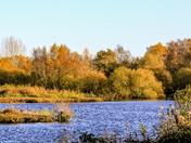 Autumn comes to Pensthorpe