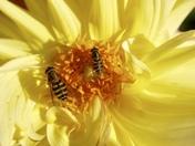 Nectar time in November!!