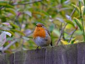 Rock'n Robin :)