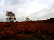 Dunwich Forest