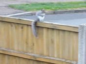 TIME STOPS STILL FOR A GREY SQUIRREL IN LATE AUTUMN