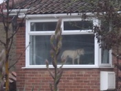 I DO LOVE THAT DOGGIE  IN THE WINDOW