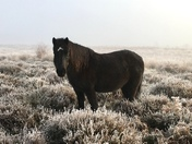 A beauty on the frosty & foggy common