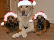 Santas little Helpers!!