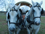 unicorn horses and rein deers at helmingham hall christmas market