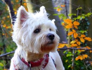 Photo Chllenge - Pets