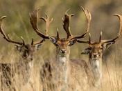 Beautiful Deer watching me.