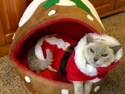 Festive feline fun