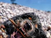 Maisie on the beach